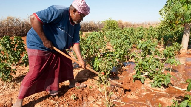 The impact of civil war on crop production in Somalia