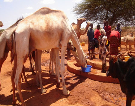 Minimum Guidelines for agriculture and livelihoods interventions in humanitarian settings, Somalia