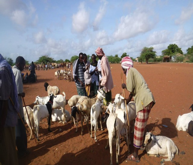 Building resilience through sicial safety nets in South Somalia