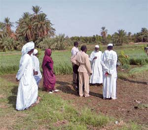 Current status of agriculture and future challenges in Sudan