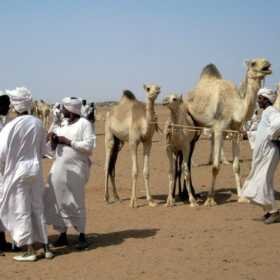 Brief overview of Sudan economy and future prospects fro agricultural development