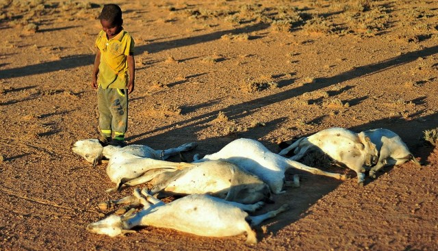 Drought conditions and management strategies in Sudan