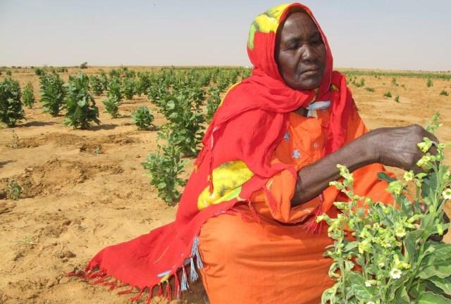 We no longer share the land   agricultural change, land and violence in Dafur