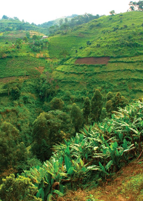 Fertile Investments in Uganda's Agriculture
