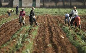 African Land Tenure: Questioning Basic Assumptions