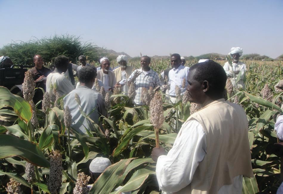 Challenges for Food Security in Eritrea – A Descriptive and Qualitative Analysis