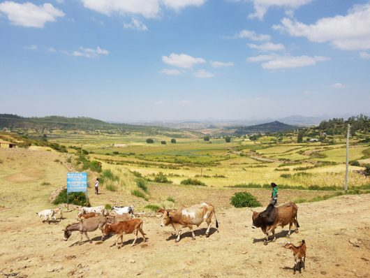 An evaluation of environmental impact assessment in Eritrea