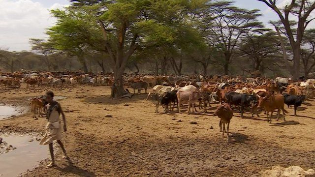 A Thirsty Third World  How Land Grabs Are Leaving Ethiopia in the Dust