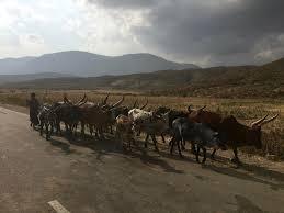 Ethiopia Rangeland
