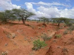 Kenya Rangeland