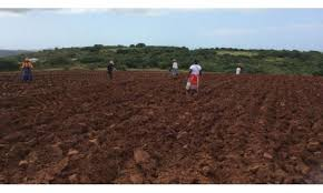 Customary land tenure reform in Uganda   Leaasons from South Africa