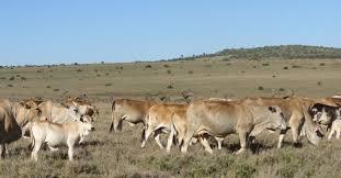 Uganda rangelands