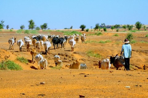 igad pastoral land governance forum
