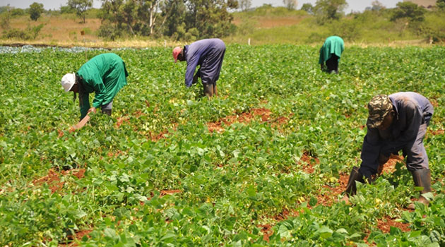 Do land disputes affect smallholder agricultural productivity  evidence from Kenya