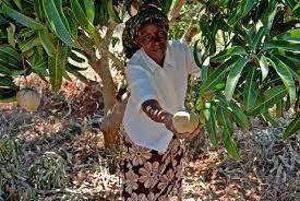 Kenya Agricultural Sector Development Strategy