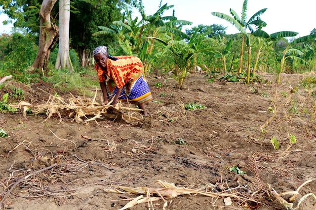 Analysis of the effect of land tenure on technical efficiency in smallholder production in Kenya