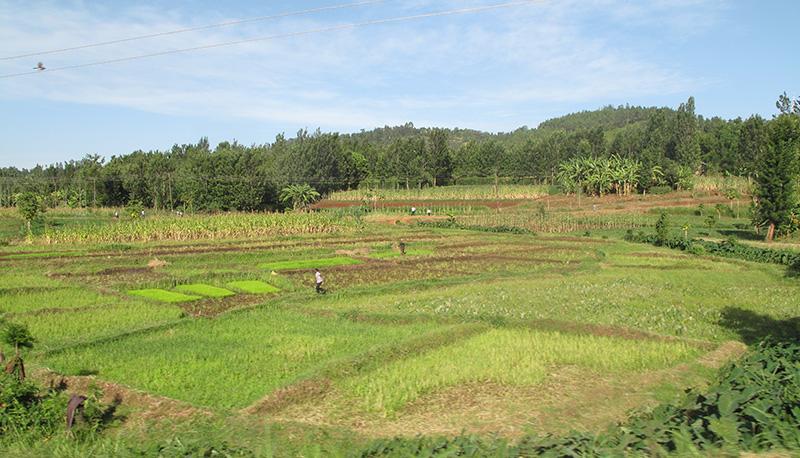 Kenya experience in Land Reform  the million acre settlement scheme