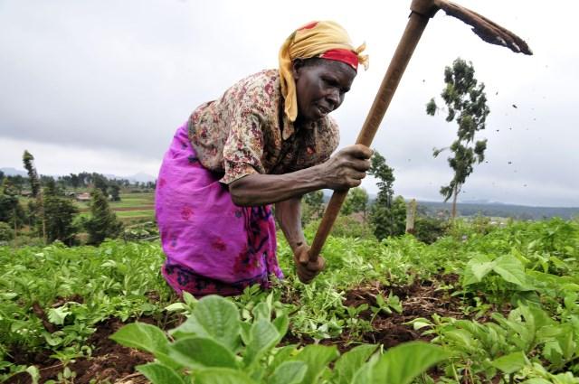 Gender, land and labour in central province , Kenya