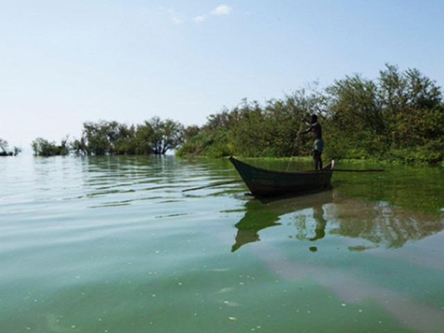 Land cover, land use change and related issues in the Lake Victoria basin  States, drivers, future trends and impacts on environment and human livelihoods