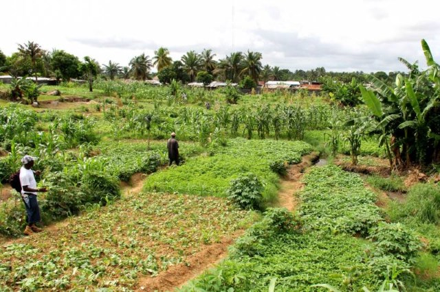 International perspectives on land tenure, development and spatial inequality in Kenya
