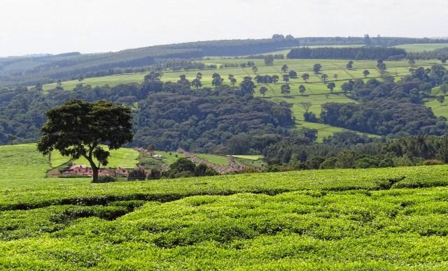 Designing a Land Restitution Programme in Kenyan Emerging Transitional Justice