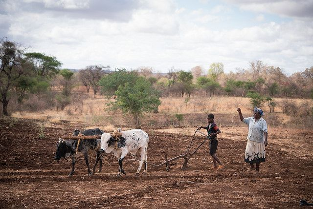 Land tenure reform and changes in land use and land management in semi arid Tharaka, Kenya