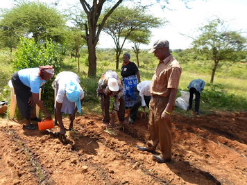 Persistence of the commons   Economic theory and community decision making on land tenure