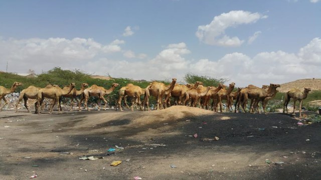 Somali connection to land and economics of land degradations