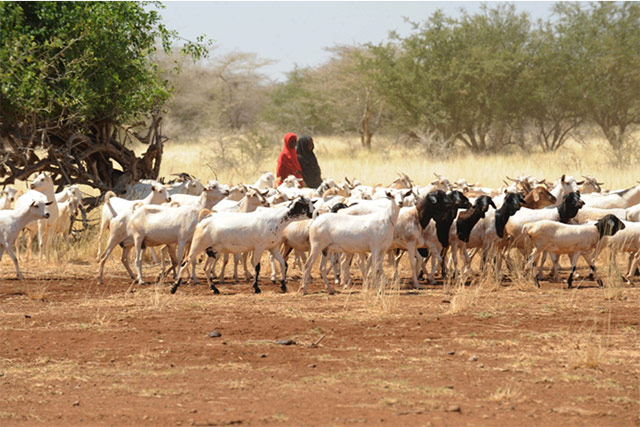 Conducive Conditions: Livelihood Interventions in Southern Somalia