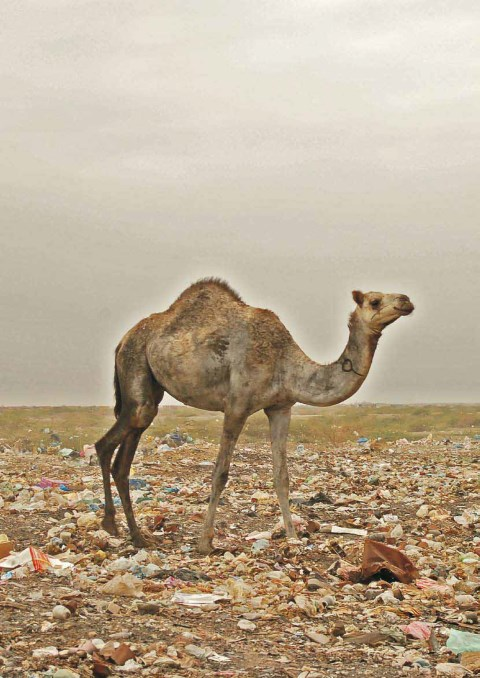 Urban environment and environmental health in South Sudan