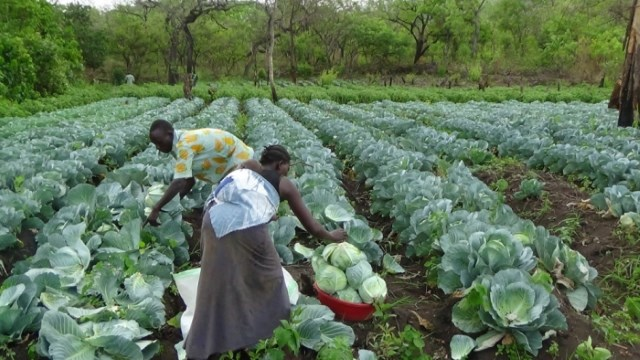 Land tenure reforms for food security in South Sudan