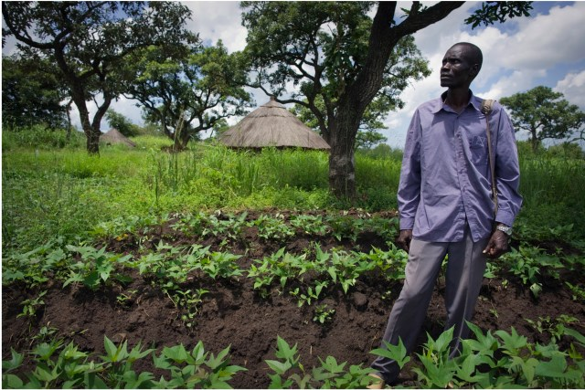 Livelihoods, basic services and social protection in South Sudan