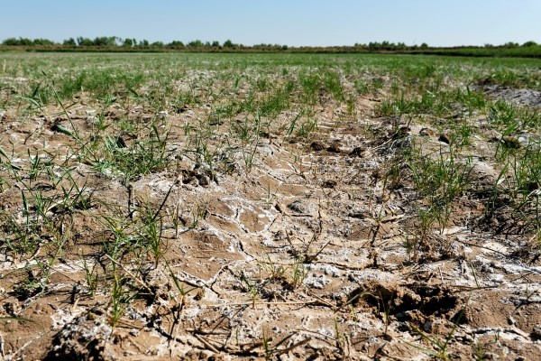 Rehabilitation and Management of Salt-affected Soils to Improve Agricultural Productivity in Ethiopia and South Sudan