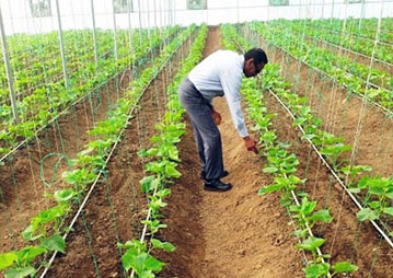 Agricultural potential in the Sudans  past experience and future outlook