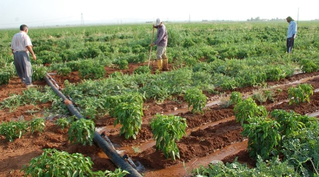 Assessment of the role of agriculture in Sudan economy