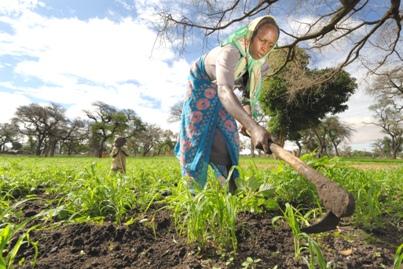 Agricultural development in Dafur Region, Sudan