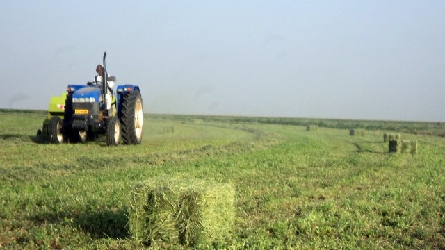 Assessment of natural vegetation clearing and regrowth in Southern Gadarif, Sudan