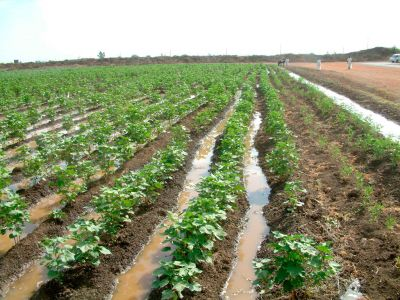 Agriculture policy in Sudan
