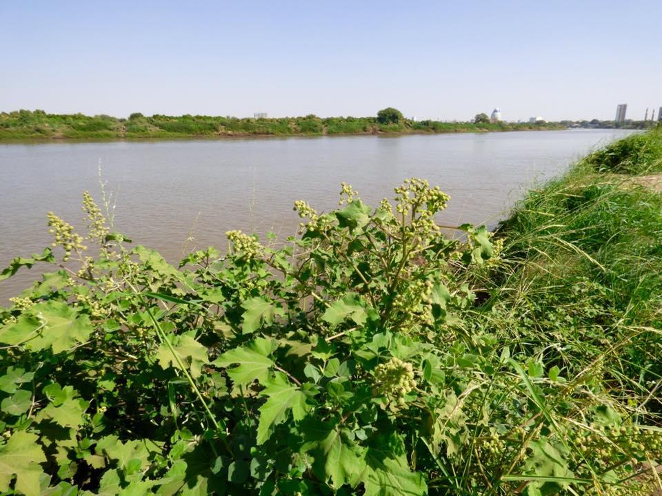Land Use Land Cover Change Detection due to Urbanization Case Study  Southern part of Khartoum