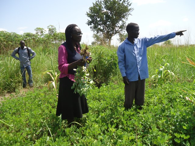 Conflict and Agricultural Portfolios  Evidence from Northern Uganda