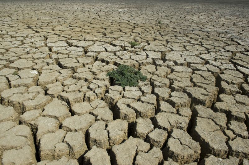 Drought conditions and management strategies in Eritrea