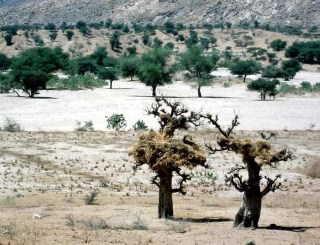 Environment, society and the state in southwestern Eritrea