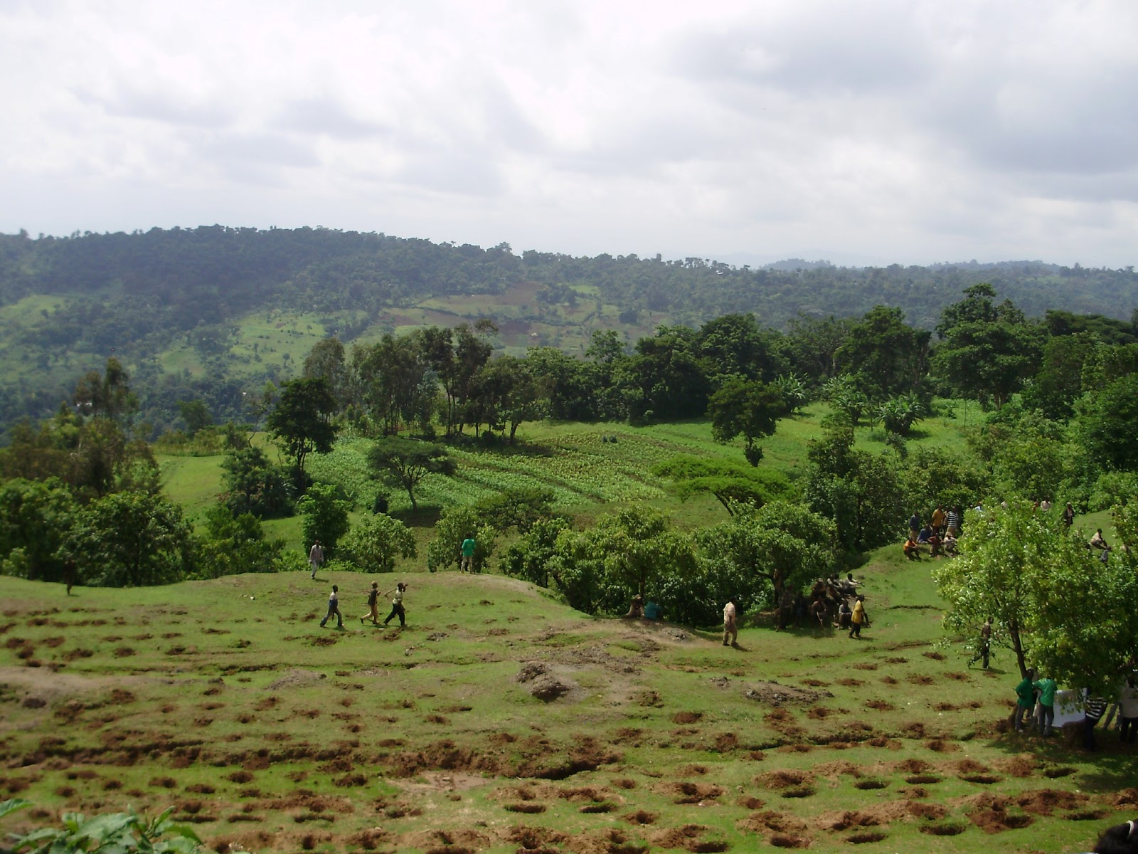 Agroforestry and land productivity   evidence from rural Rthiopia