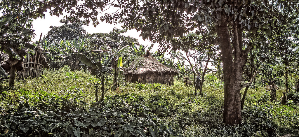Analyzing the Rate of Land Use and Land Cover Change and Determining the Causes of Forest Cover Change in Gog District, Gambella Regional State, Ethiopia