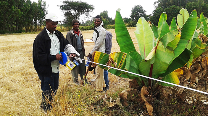 Assessing the Certification Process of Ethiopia's rural Lands
