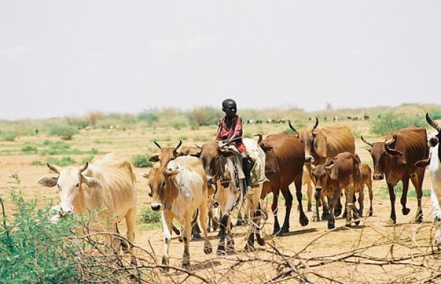 Double Marginalized Livelihoods  Invisible Gender Inequality in Pastoral Societies
