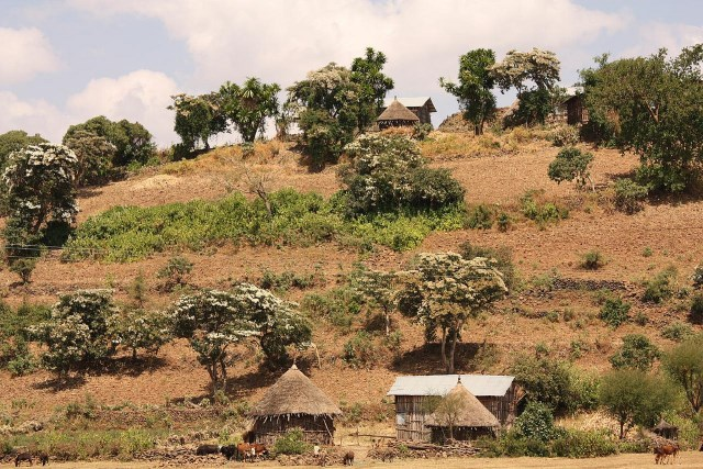 After the Derg   An assessment of rural land tenure issues in Ethiopia
