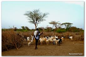 Ethiopia Pastoral Land Governance