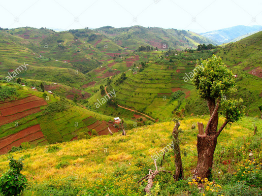 Uganda Land use Planning Policy, Tools